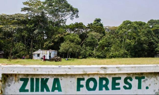"""اجتماع طارئ لمنظمة الصحة العالمية لبحث أخطار """"زيكا"""""""