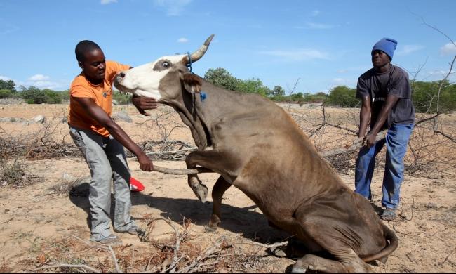زيمبابوي: أكثر من مليوني مواطن يعانون نقص الغذاء