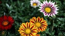 """الزهور تزين احتفالات """"شم النسيم"""""""
