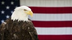 الطائر الرمز للحكومة الأميركية في مرمى الصيادين