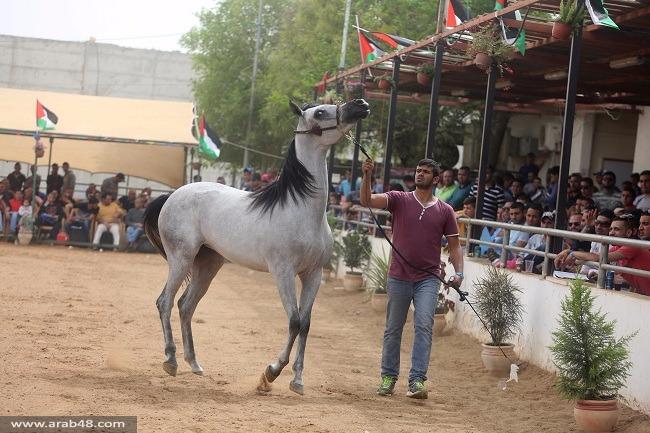 صور: بطولة جمال للخيول الفلسطينية