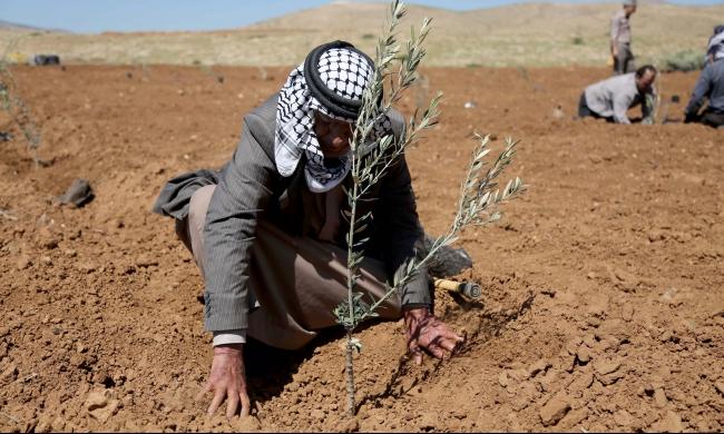 """فلسطينيو الغور يغرسون الأشجار إحياءً لـ""""يوم الأرض"""""""
