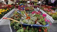 """""""سوق الأزهار اللبنانية"""" تزين شوارع بيروت"""