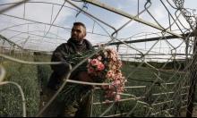 الحصار وشح المياه يجردان غزة من أزهارها