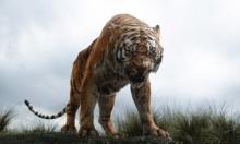 نمر يقتل حارسة في حديقة حيوانات