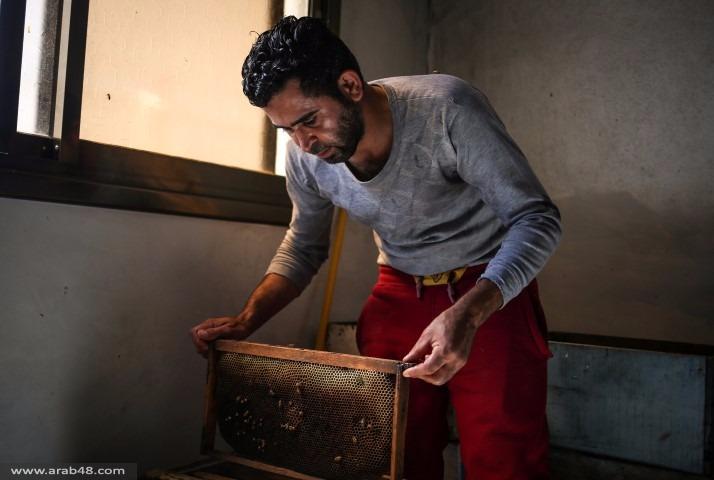 قلة المراعي بغزة تدفع النحّالين إلى المخاطرة