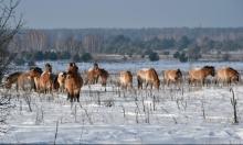 أستراليا: إعدام خيول برية للمحافظة على البيئة!