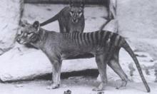 أستراليا تضيف 49 نوعا من النباتات والحيوانات مهددة بالانقراض