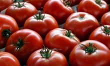 تناول الطماطم لتجنب تضخم البروستات!