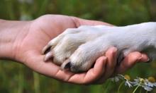 متى روض الإنسان الكلب أول مرة؟