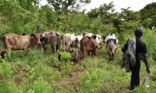 41 مليون إنسان بالجنوب الأفريقي يفتقرون للأمن الغذائي