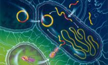 البكتيريا المقاومة للمضادات الحيوية في انتشار مستمر