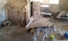 البعنة: فتشوا عن سلاح وعثروا على كلاب نُكل بها