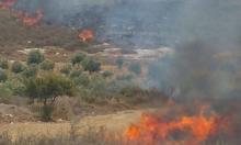أبو سنان: حريق هائل في المنطقة الحرشية
