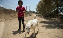 """لأول مرة في غزة.. """"الكلاب الشاردة"""" تجد مأوى"""