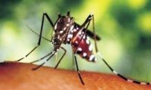 فيروس زيكا يصل كوبا بإصابة شخصين