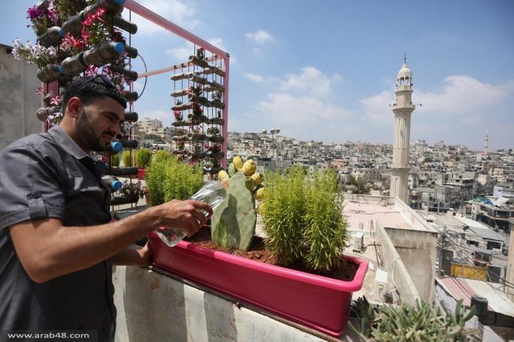خضرة وسط الجمود... جنة الفلسطيني نخلة