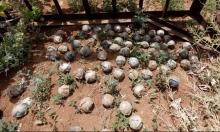 القنابل العنقودية قتلت 400 مدني غالبيتهم بسورية واليمن