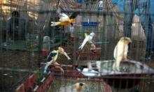 اللجوء إلى العصافير... قصة نازح