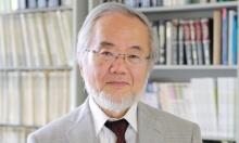 الحائز على نوبل للطب لعام 2016... ياباني