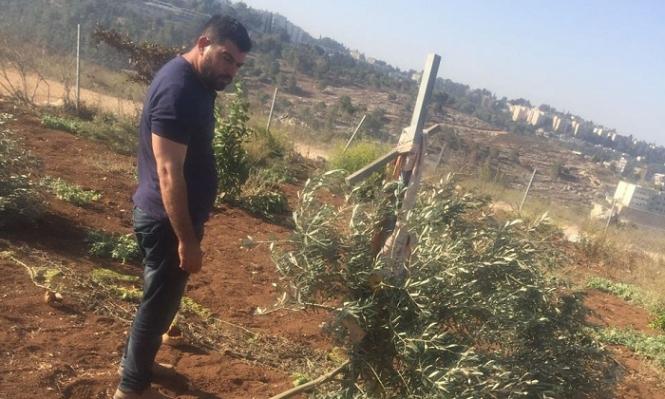 الرينة: قطع عشرات أشجار التين والزيتون
