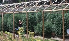 التدريب على زراعة الماريوانا في كلية كندية