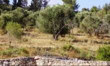 الاحتلال يسلم أراض بملكية فلسطينية خاصة لمزارعين إسرائيليين