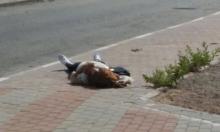 نابلس: استشهاد فلسطينية بنيران الاحتلال بادعاء محاولة طعن