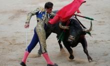 كتالونيا تعترض إسبانيا: مصارعة الثيران لن تعود!