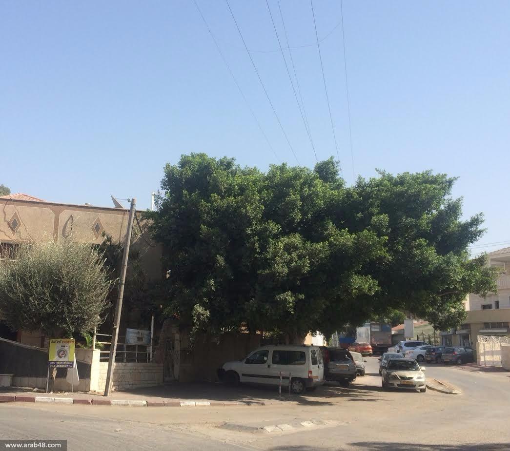 السبت المقبل: إحياء ذكرى مجزرة كفر قاسم