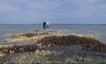 نيوزيلندا: الكائنات البحرية تواجه خطر الانقراض