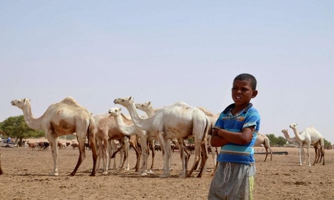 النيجر: مقتل 18 شخصا وعشرات الجرحى بسبب قطيع مواشي