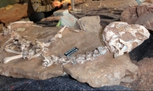 """اكتشاف حفرية لـِ""""تنين الوحل"""" في الصين... صدفةً"""