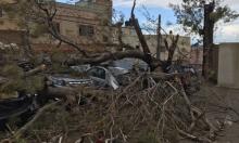 الطيبة: سقوط شجرة في مدرسة كاد يودي بكارثة