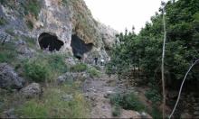 الكرمل: حبات فول بعمر 14 ألف عام في مغارة الواد