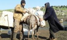 ارتفاع أسعار الوقود يعيد الحمير للطرقات بسورية