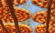 البرتقال... وقاية للمدخنين من السرطان