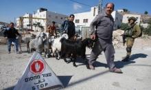 العليا تمهد لهدم  8 قرى فلسطينية بجبل الخليل