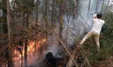 تشيلي: حرائق الغابات تودي بحياة 11 شخصا