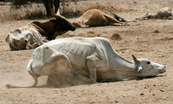 كينيا تطلب المساعدة بعد إعلان الجفاف كارثة قومية