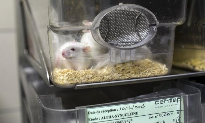 الأبحاث المخبرية على الحيوان