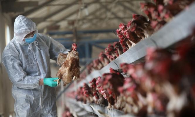 إنفلونزا الطيور تقتل 79 شخصا في الصين