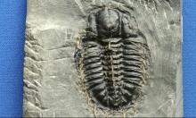 اكتشاف مفاجئ: الحياة تعافت سريعا على الأرض بعد أسوأ انقراض