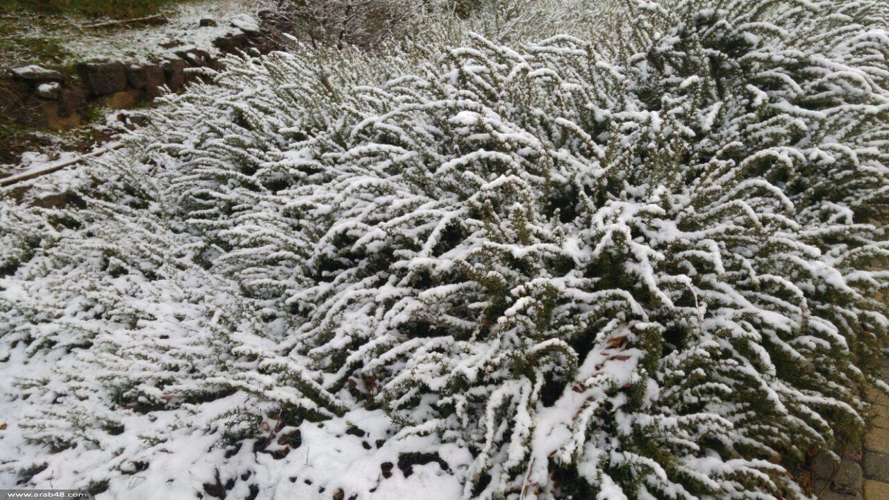 حالة الطقس: شديد البرودة وانحباس الأمطار