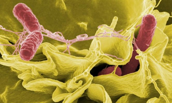 """""""الهيئة الأوروبية لسلامة الغذاء"""" تحذر من بكتيريا جديدة"""