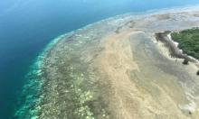 محاولة لإنقاذ الشعاب المرجانية من تأثير تغير المناخ