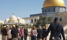 131 مستوطنا يقتحمون الأقصى وادعيبس يحذر من هدمه