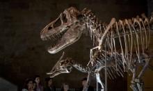 المغرب يطالب بهيكل ديناصور عمره 66 مليوم عام
