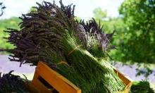 الآثار الضارة للأعشاب الطبية...