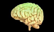 هل يمكن تدريب الدماغ البشري كأنه عضلة؟